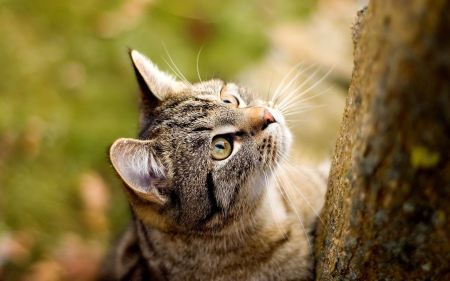 Free Tree Climbing Cat