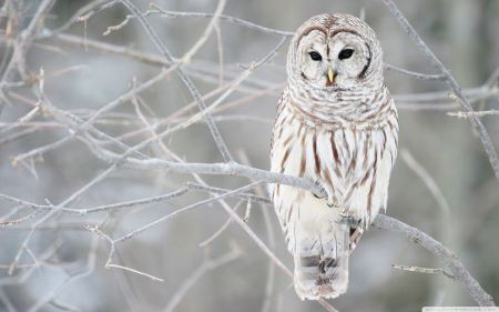 Free White Owl Gazing Out
