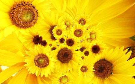 Free Bunch of Sunflowers