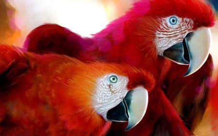 Free Smiling Parrots