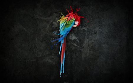 Free Pretty Parrot Splash