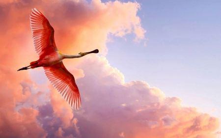 Free Flaming Sky and Bird