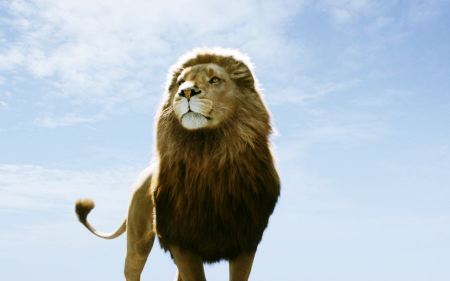 Free Aslan Lion in Chronicles of Narnia Dawn Treader