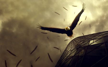 Free An Eagle and his Feathers