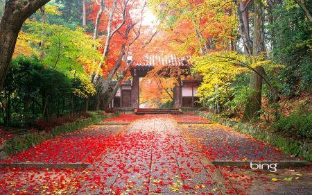 Free Autumn in Japan