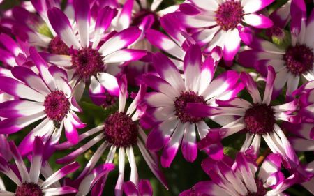 Free Beautiful White and Purple Flowers