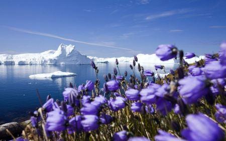 Free Purple Arctic Flowers by Lake Wallpaper