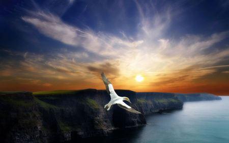 Free Wing Flight
