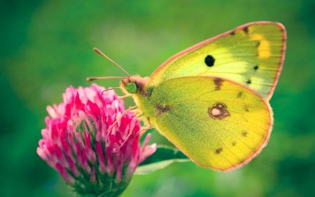 Free Pink and Green Butterfly