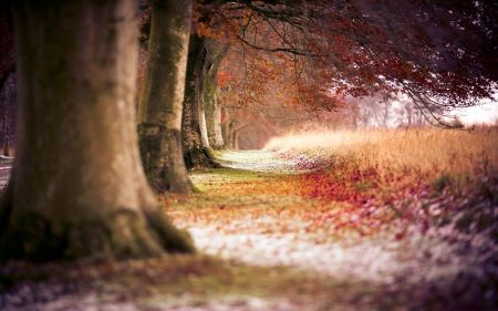Free Beech Autumn Trees