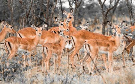 Free Herd of Deer