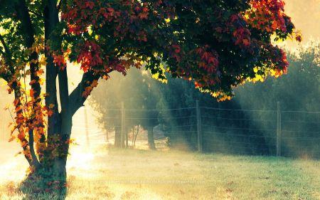 Free Autumn Morning