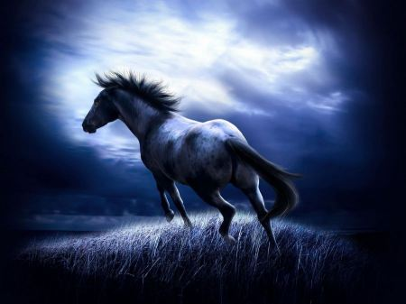 Free Dark Dreamy Horse