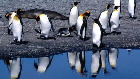 Free Penguins by the Water