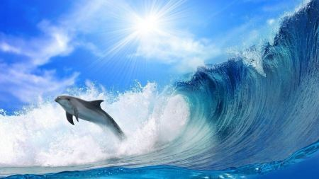 Free Dolphins and Tidal Waves