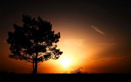 Free Sunrise In Summer Wide