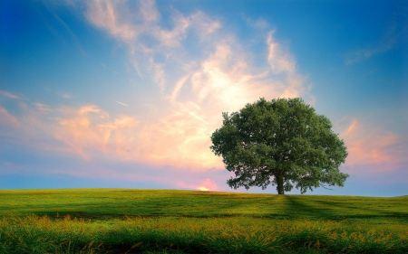 Free Sunshine Behind Tree
