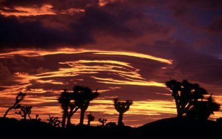 Free Sunset in Desert