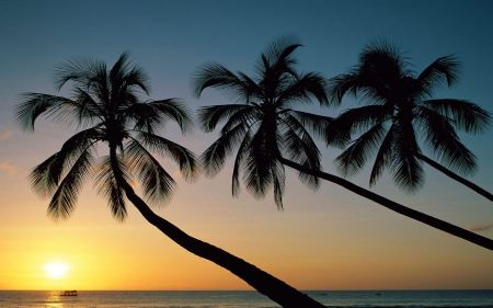 Free Sunset and Palm Trees
