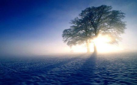 Free Sun Shining Through Trees
