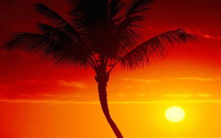 Free Sunset and Palm Tree