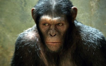 Free Rise of The Planet of The Apes Ape