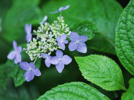 Free Light Purple Flowers