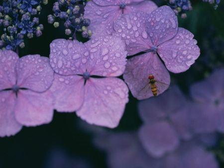 Free Bee on Purple Flower
