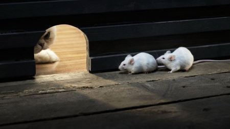 Free Mice Hiding from a Cat
