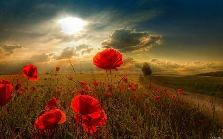 Free Sunlight on Flower Field