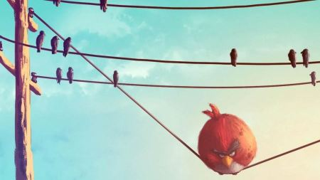 Free Animals Funny Artwork Angry Birds Wires