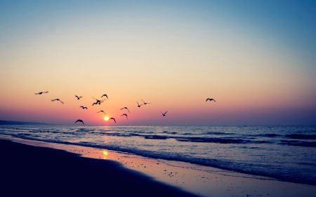 Free Birds Flying over Ocean at Sunset