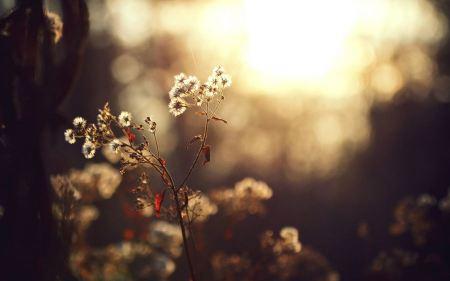 Free Dandelion Close-Up
