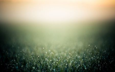 Free Water Drops on Grass Wallpaper