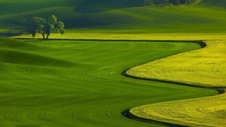 Free Green Landscape