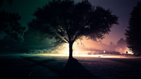 Free Light Landscapes Trees Night Roads