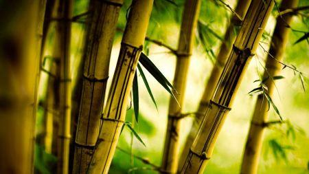 Free Bamboo Close Up