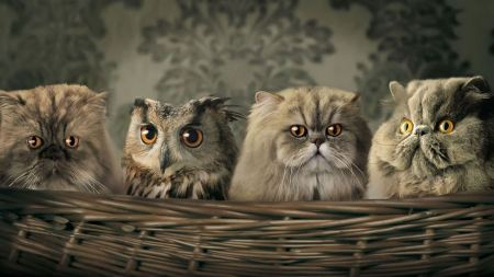Free Owls and Cats