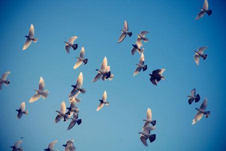 Free Birds in the Sky