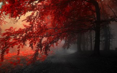 Free Red Autumn Leaves