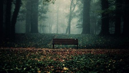 Free Lonely Bench in Dark Forest