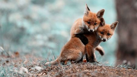 Free Two Quick Brown Foxes