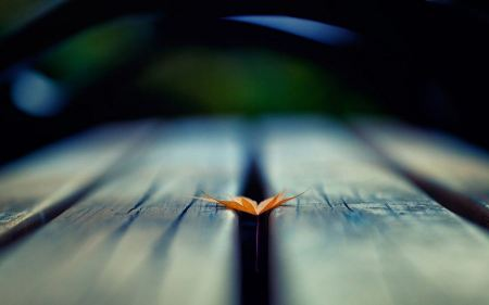 Free Small Leaf on Bench Wallpaper