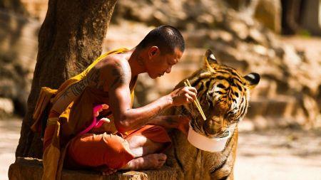 Free Tiger Monk Harmony