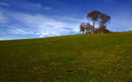 Free Indian Tree on Hill