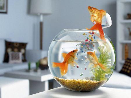 Free Fish Jump