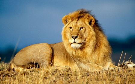 Free Reigning King of the Jungle