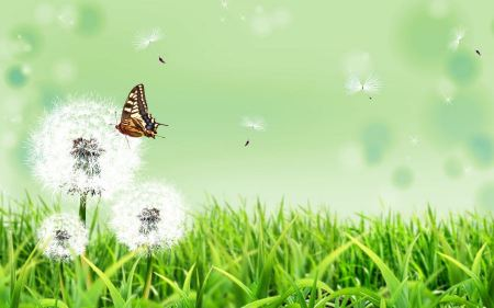 Free Butterfly Nature