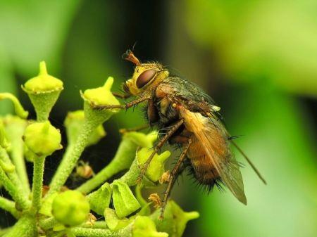 Free Bee Gathering Pollen