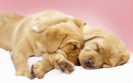 Free Adorable Sleepy Cuddling Puppies